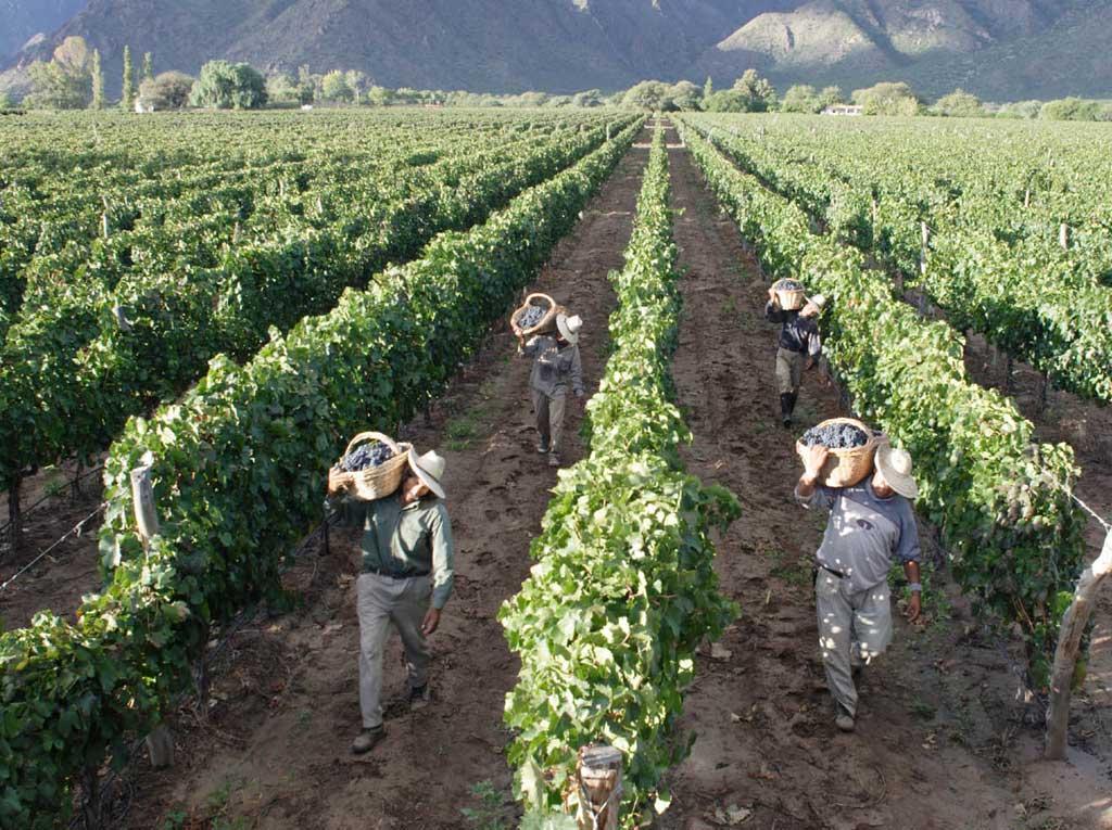 Trabajadores durante la vendimia