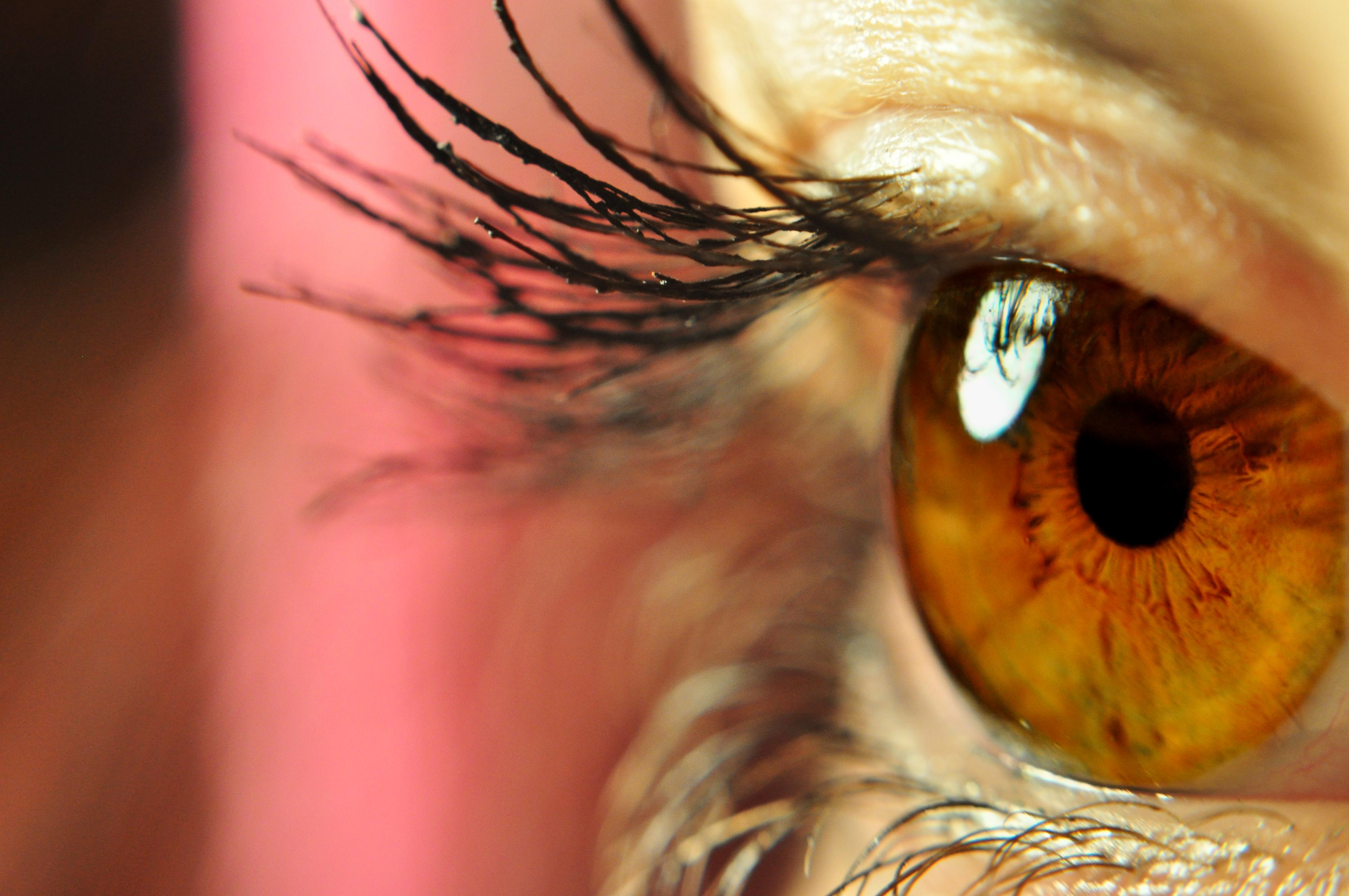 Perfil de ojo marrón