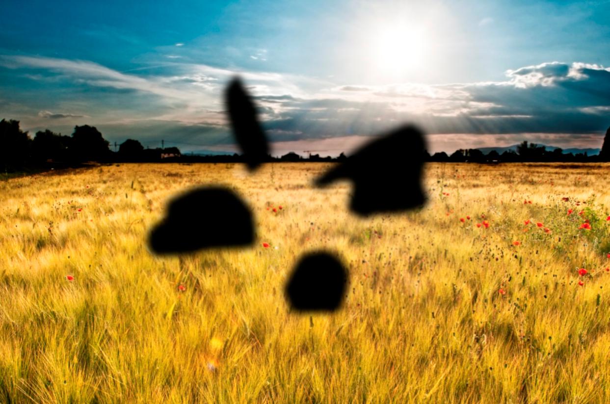 Manchas en la visión sobre paisaje