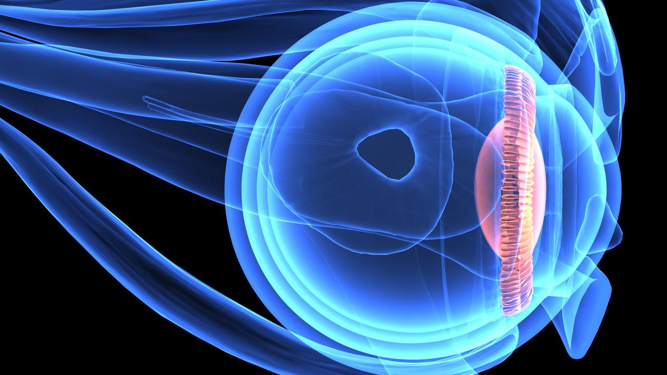 Infografía partes del ojo
