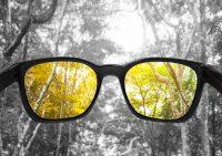 Gafas de sol con filtro amarillo en bosque