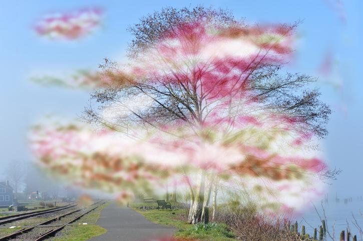 Imagen de árbol con manchas rosas, verdes y marrones