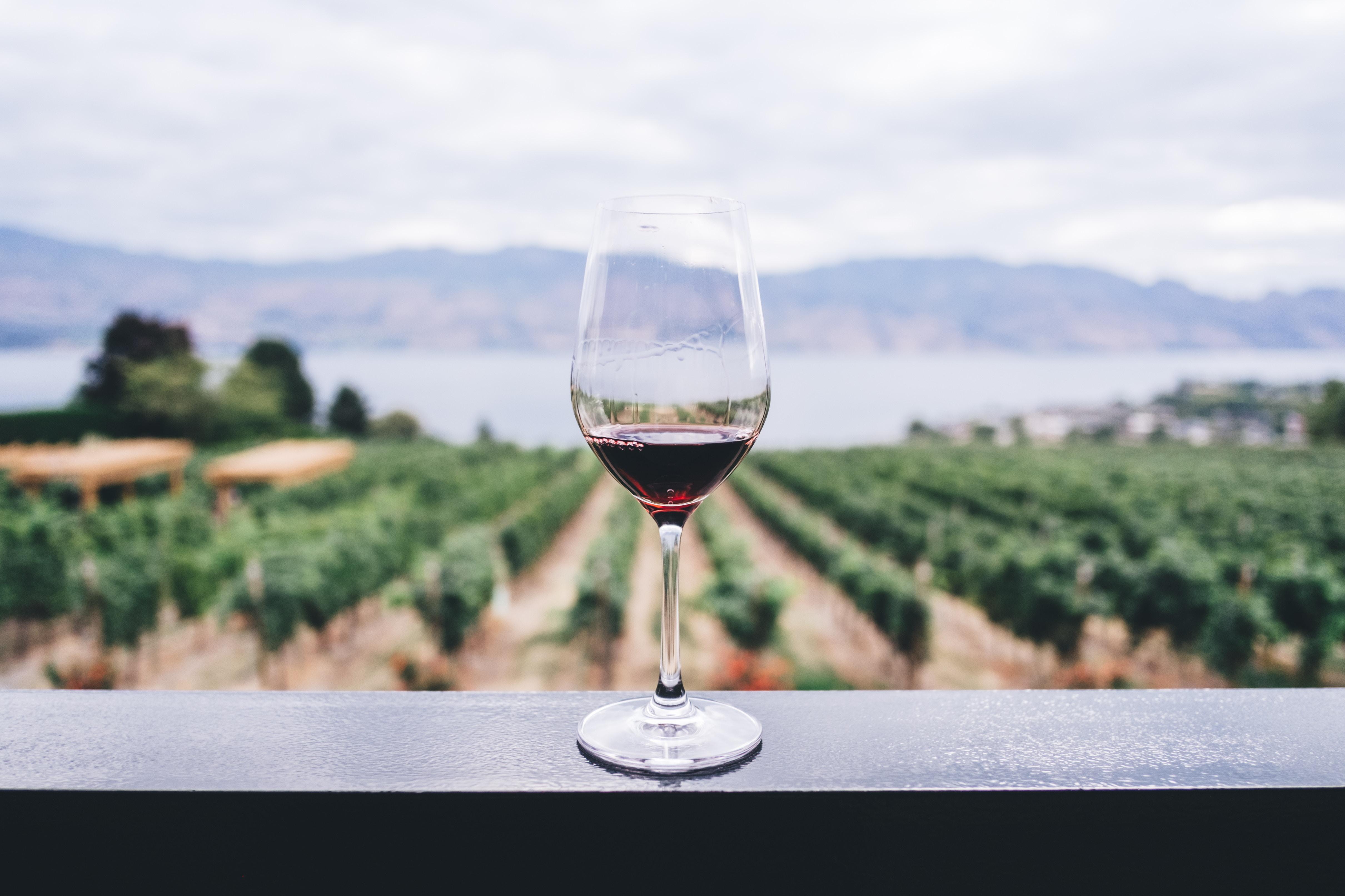 Copa de vino y paisaje viñas