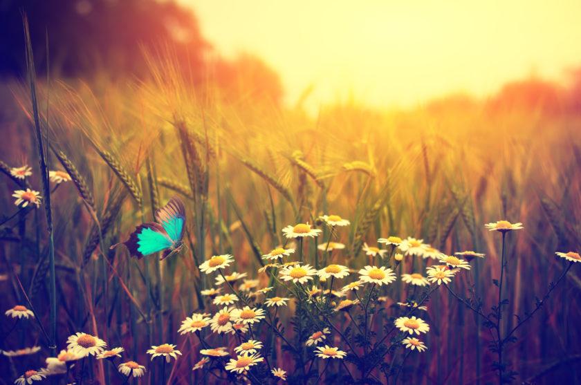Imagen de un prado con flores y una mariposa