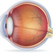 ¿Qué es la fóvea del ojo?