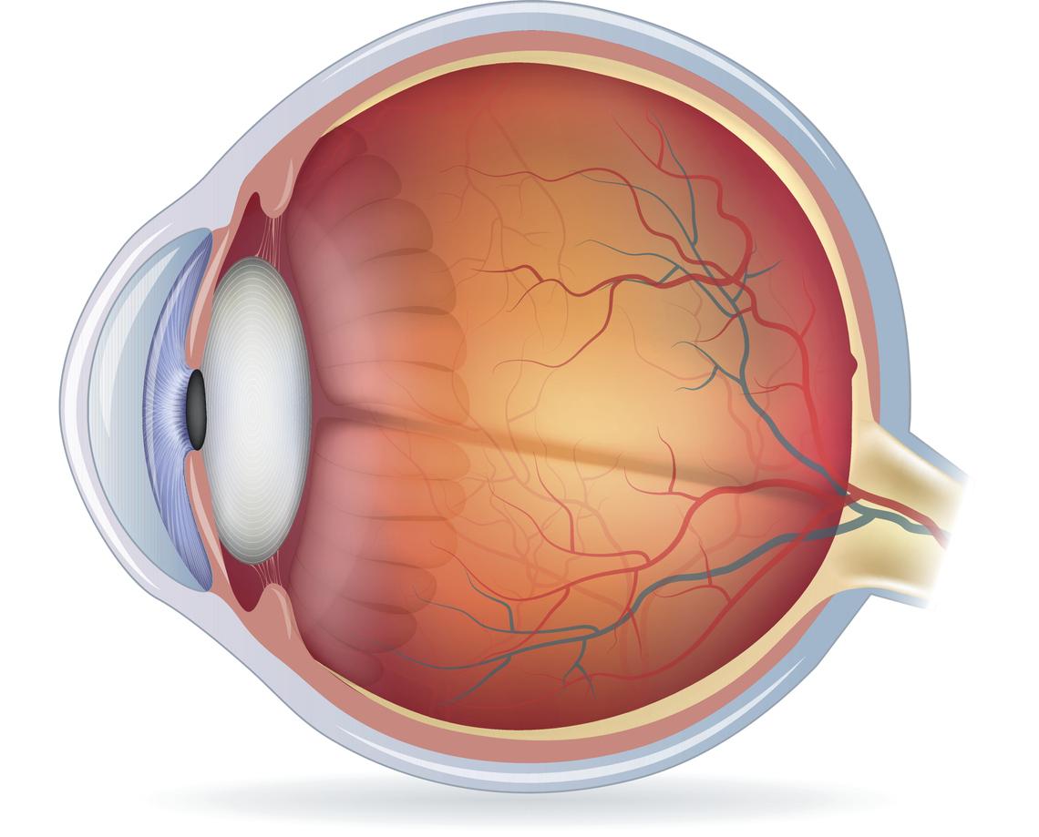 Imagen con detalles de la fóvea del ojo