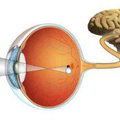 Qué es la retina y para qué sirve