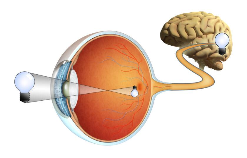 Qué es la retina