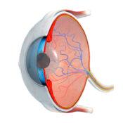 Células ganglionares de la retina: qué son y para qué sirven