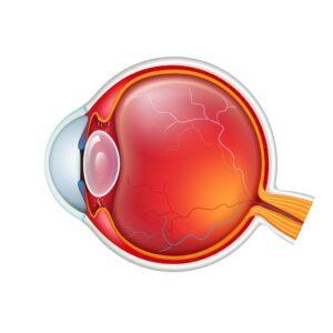 Esquema partes del ojo