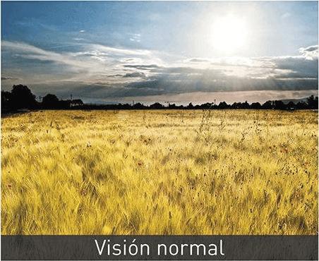 Visión normal antes de retinopatía diabética